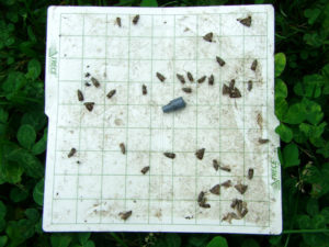 Moth trap sticky liner