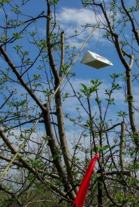 Delta-style insect monitoring trap on bamboo pole in orchard