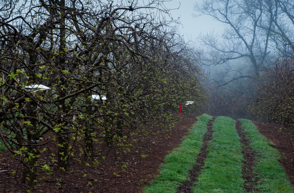 Insect monitoring traps in orchard