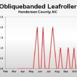Obliquebanded leafroller population trend graph