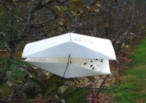 Picture of wing-style trap