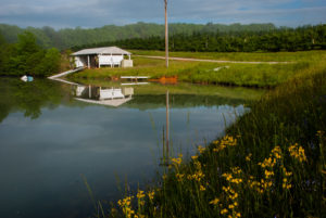 Picture of irrigation pond by apple orchard