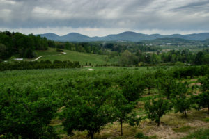apple orchard and mountains