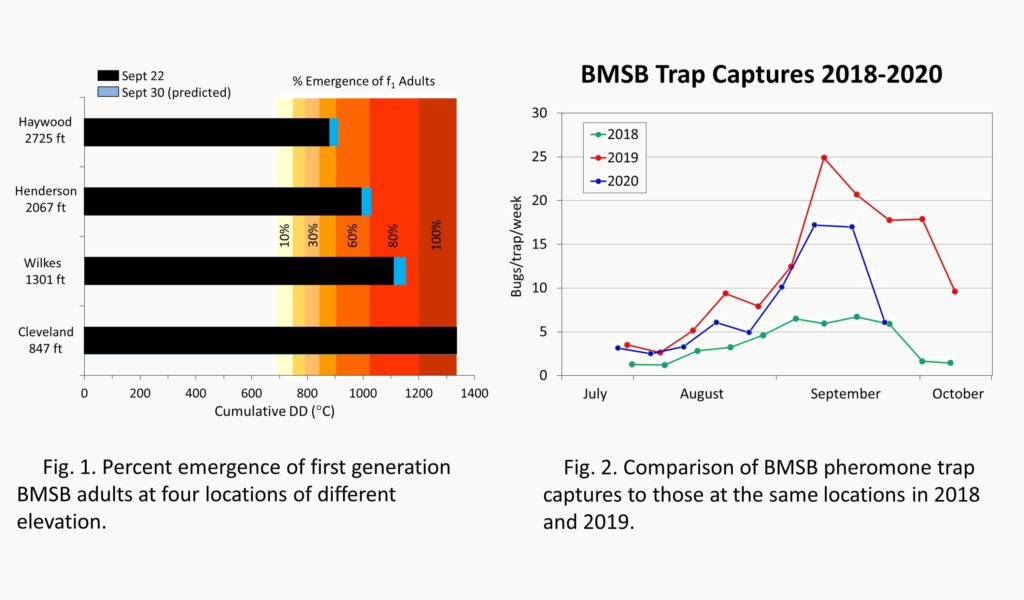 Charts showing brown marmorated stink bug emergence at various locations, and 2020 BMSB populations compared to 2019 and 2018