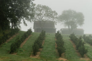 Apple orchard and barn